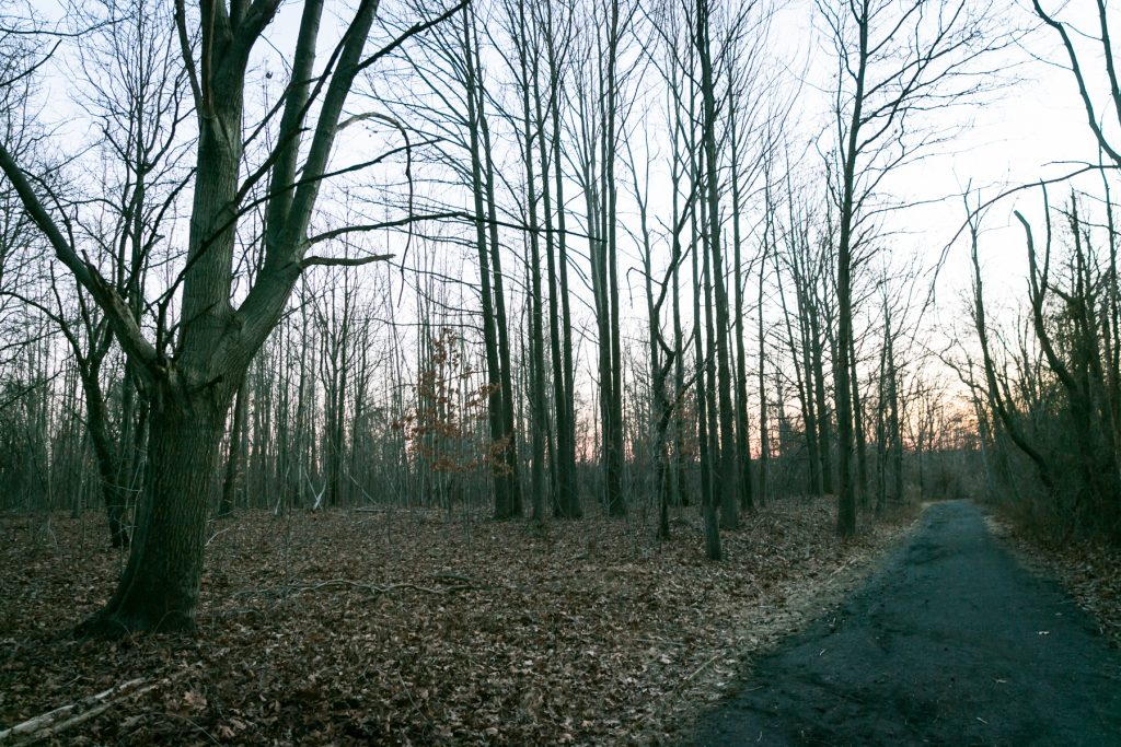 Latourette Park in Staten Island, by NYC photographer, Kelly Williams