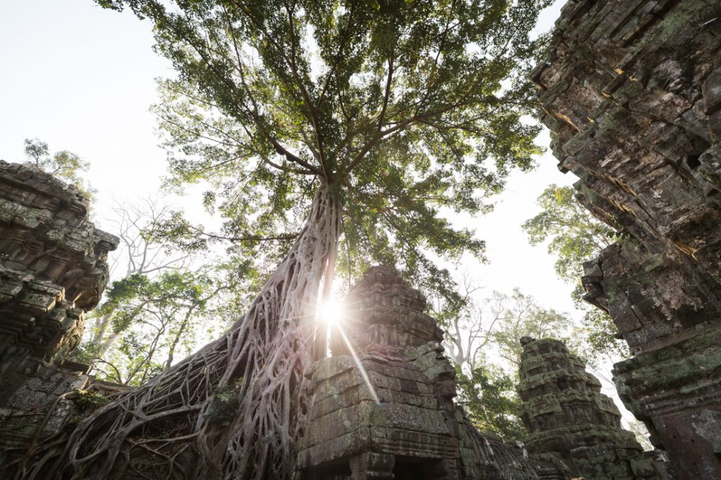 Ta Prohm for an Angkor Wat temple guide