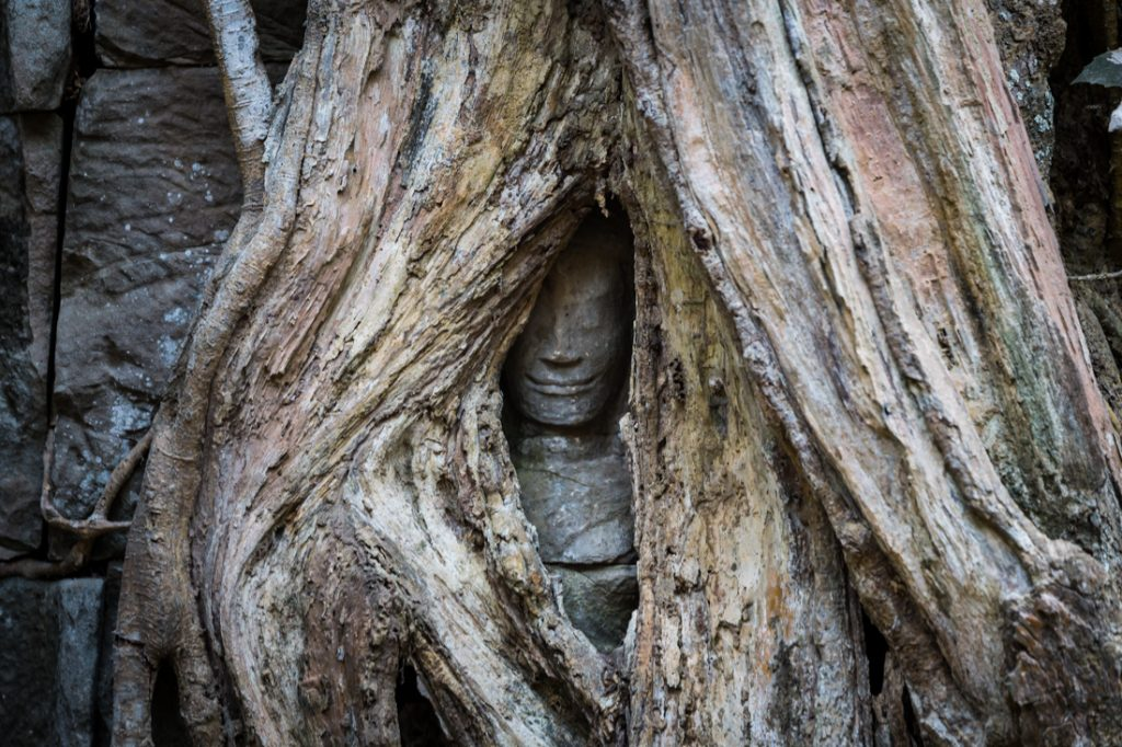 Face sculpture covered by vines at Ta Prohm for an Angkor Wat temple guide