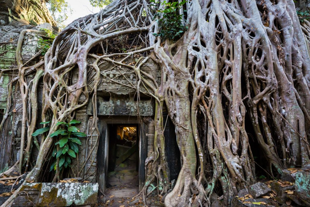 Tree-covered doorway at Ta Prohm Temple for an article on Angkor Wat travel tips