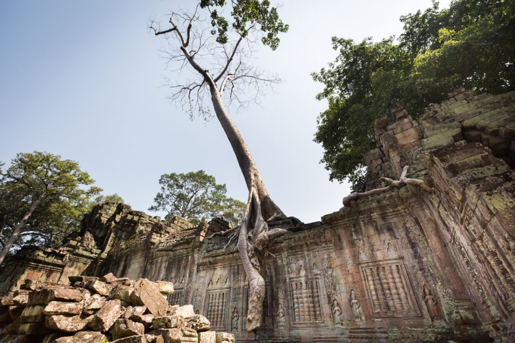 Tree growing out of a wall for an article on Angkor Wat travel tips