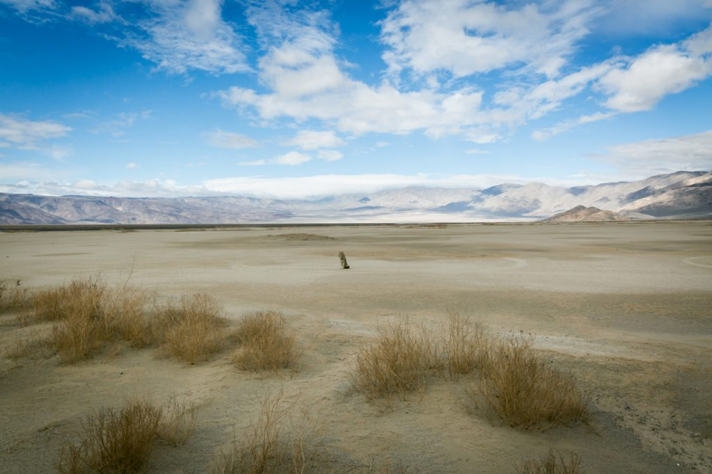 Panamint Springs landscape with coyote for an article on Death Valley travel tips