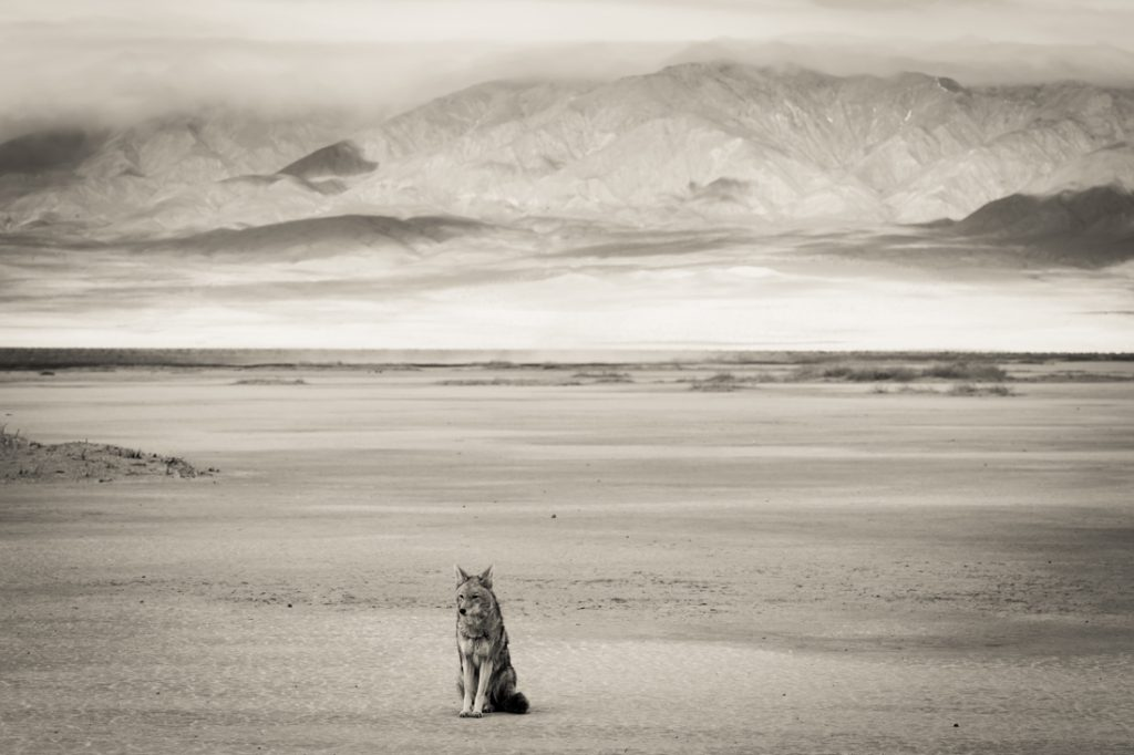 Photos of Death Valley in black and white