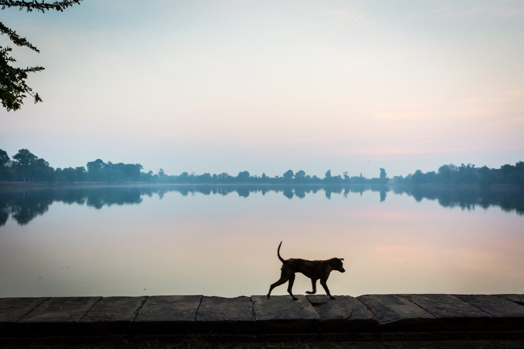 Srah Srang sunrise with dog for an article on Angkor Wat sunrise strategies