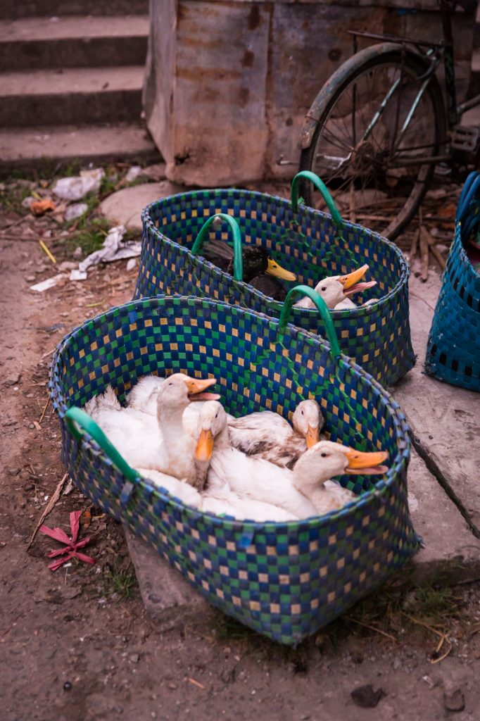 Geese in a basket for an article on the Cai Be Floating Markets
