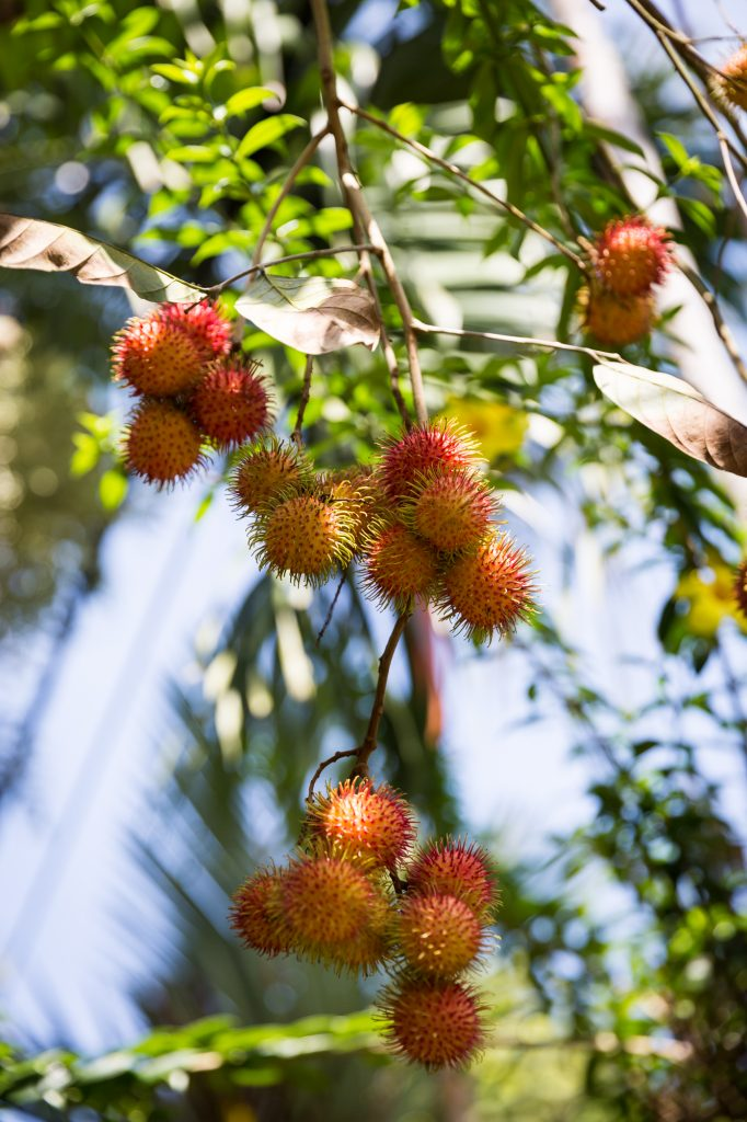Rambutan for an article on the Cai Be Floating Markets