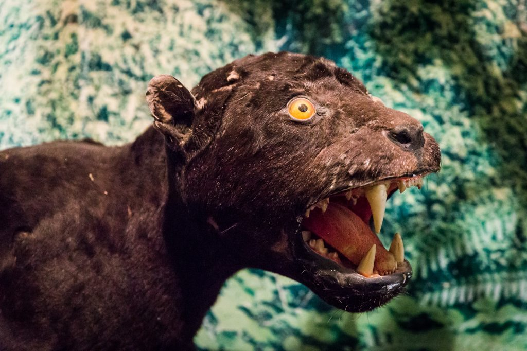 Taxidermied animal at the Saigon Zoo and Botanical Garden for article on Ho Chi Minh City street photos