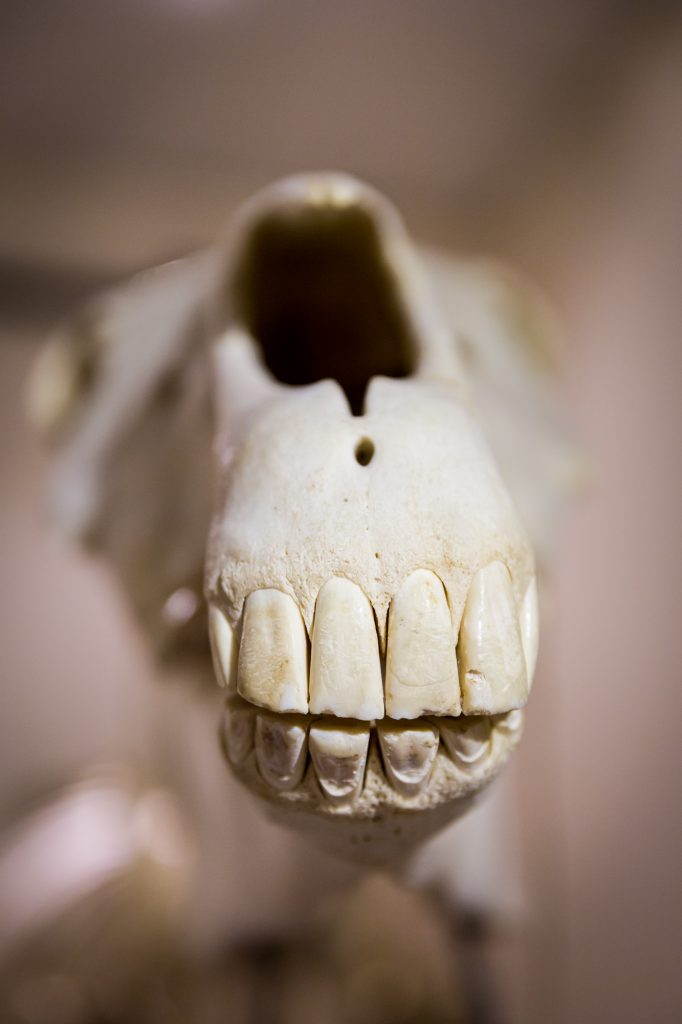 Animal teeth at the Saigon Zoo and Botanical Garden for article on Ho Chi Minh City street photos