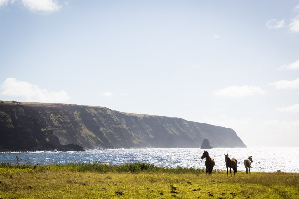 Horses by the coast for an Easter Island travel guide