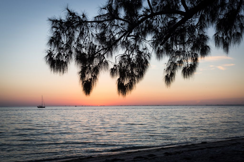 Beach in Florida with overhanging branch and sailboat in distance